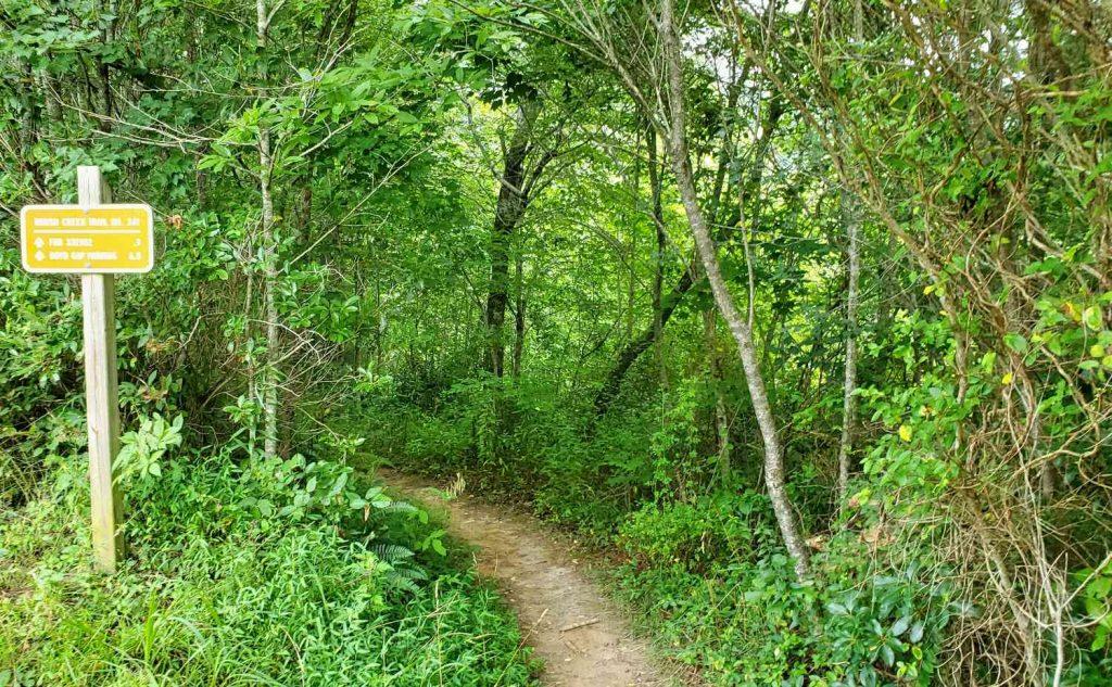Brush Creek Mountain Biking Trail